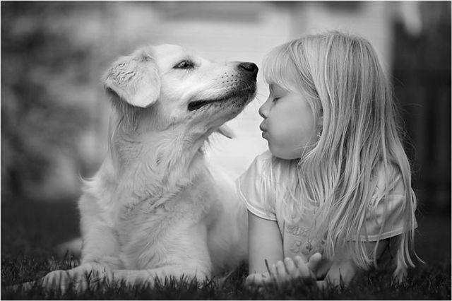 cães fofinhos,filhotes de cães