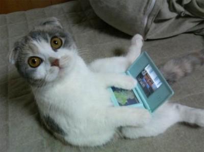 gatos engraçados !